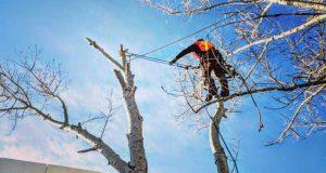 arborists-costs