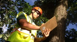 consulting-arborist