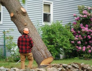 tree-cutting-service-near-me