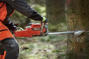 tree-felling-expert