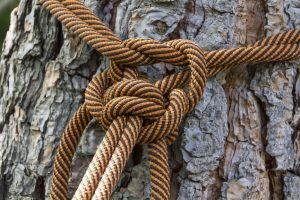 tree-roping