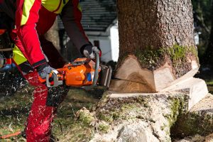 tree-sawing