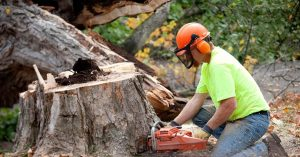 tree-arborist-working