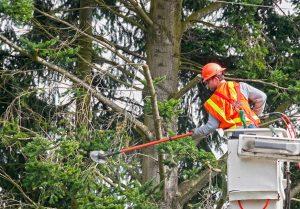tree-trimming-equipment