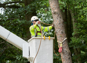 certified-tree-arborist