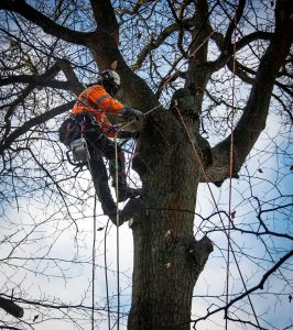 tree-surgeon-cutting-tree