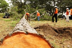 tree-removal-prices